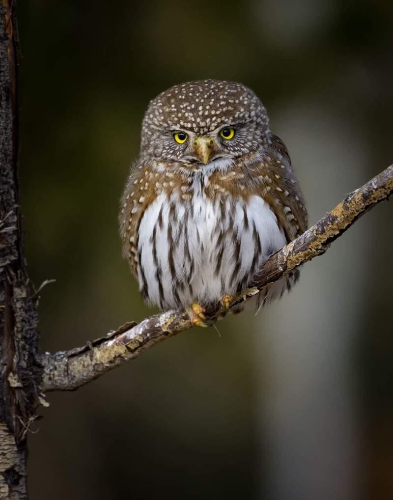 Best Bird Photo By Mary Madden