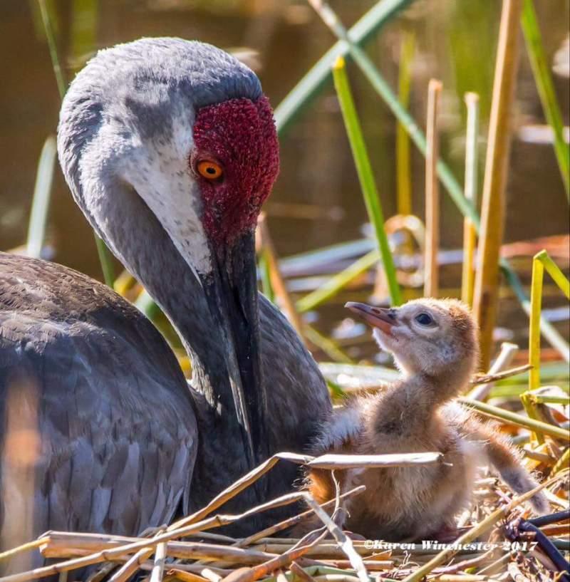 Best Bird Photo By Karen Griggs Winchester