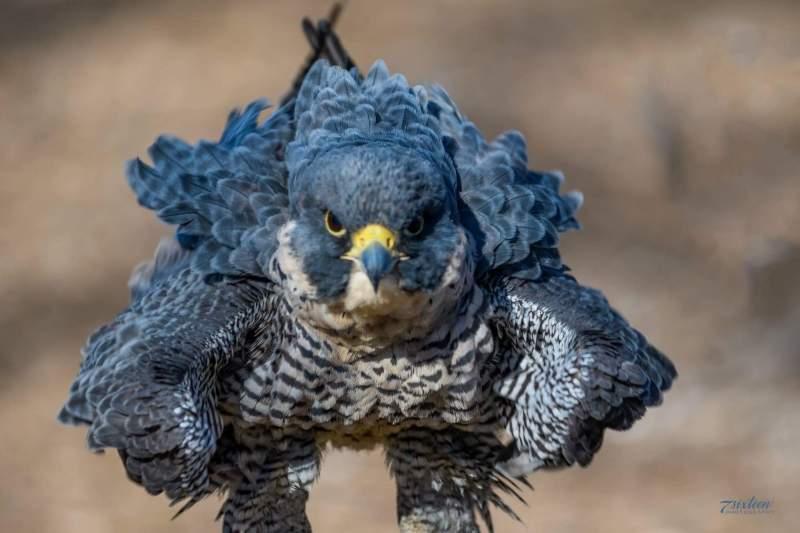 Best Bird Photo By Billy Hammond