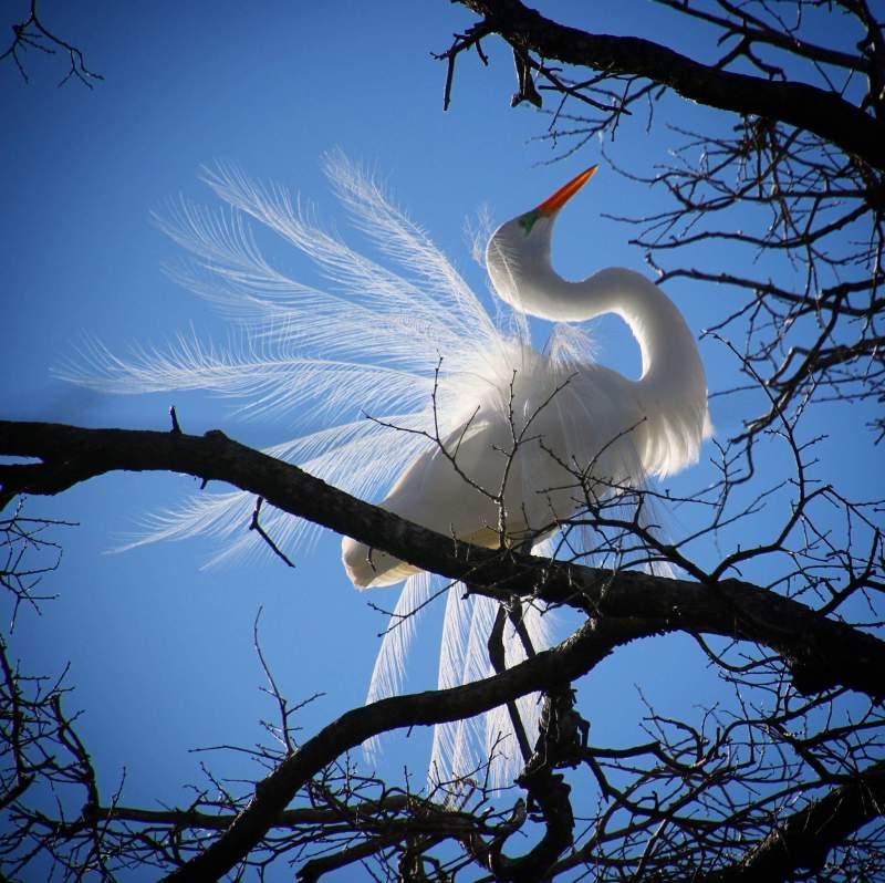 Best Bird Photo By Pam Rendall-Bass
