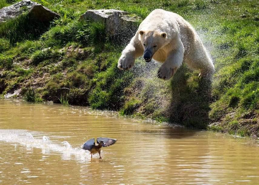 Polar Bear by Russ Bridges