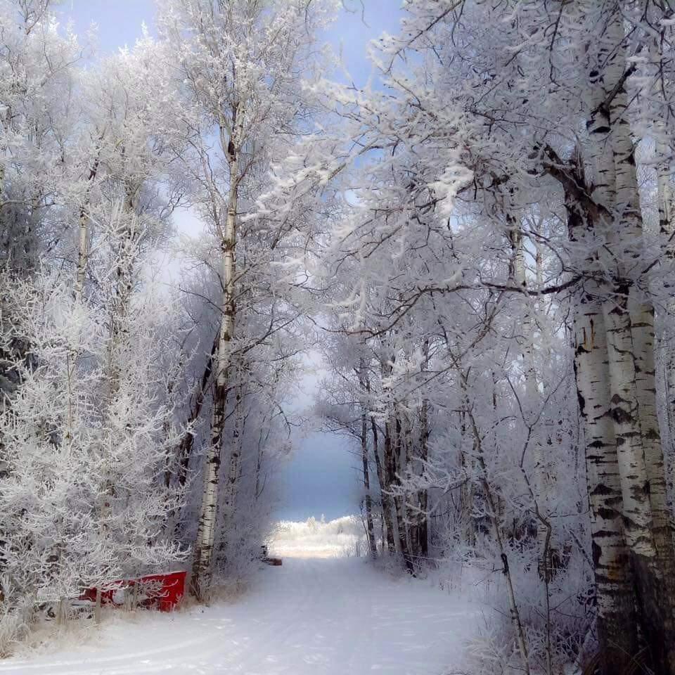 Winter,woods,trees