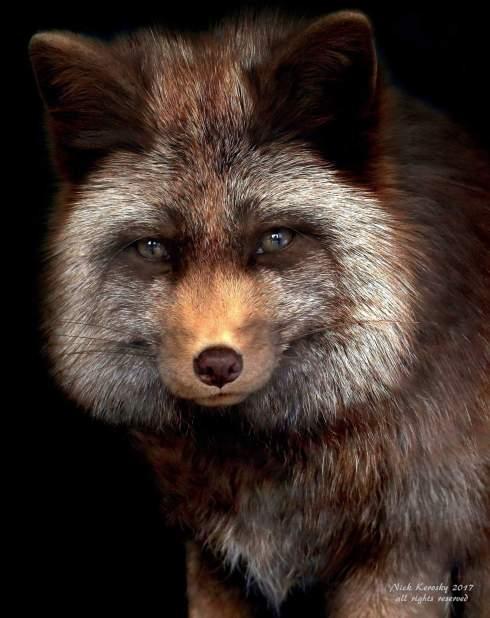 Old Fox Nick Keroskyby