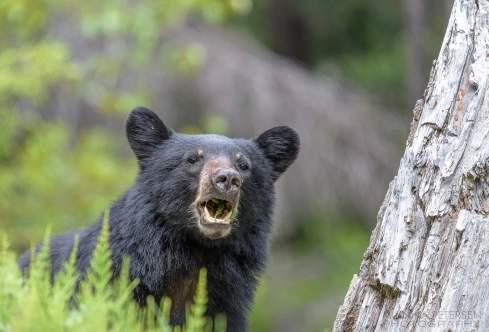 mammal, bear, land, day