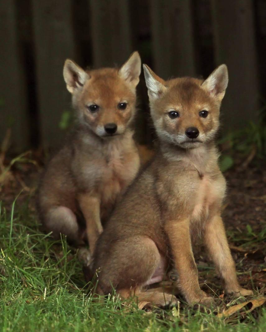 Wild Puppy Dogs by Karen Peterson