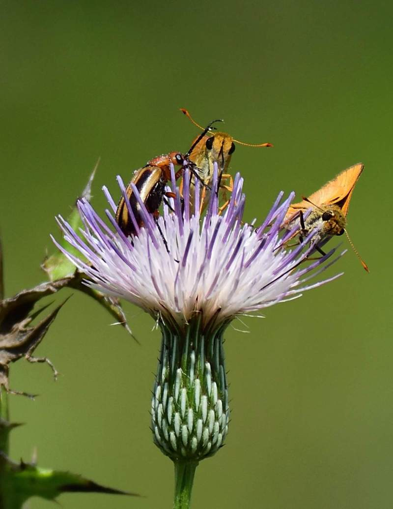 Butterfly,bugs,flower
