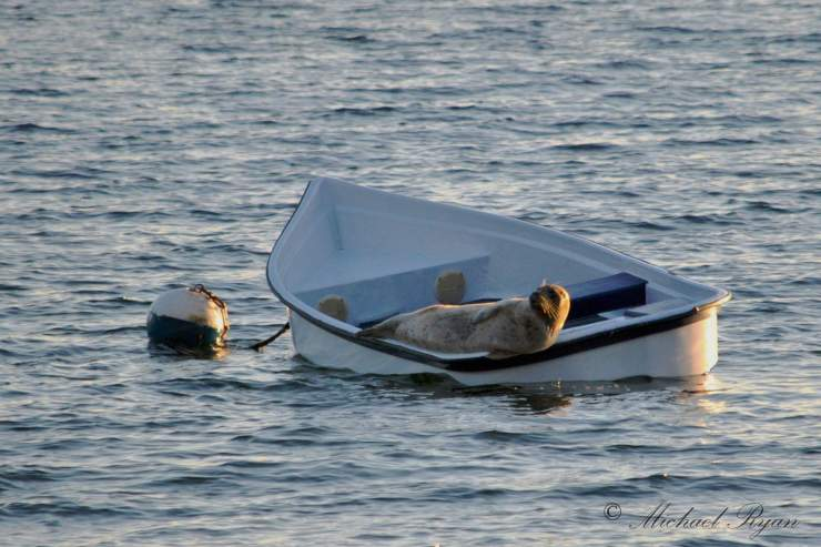 Seal in a boat