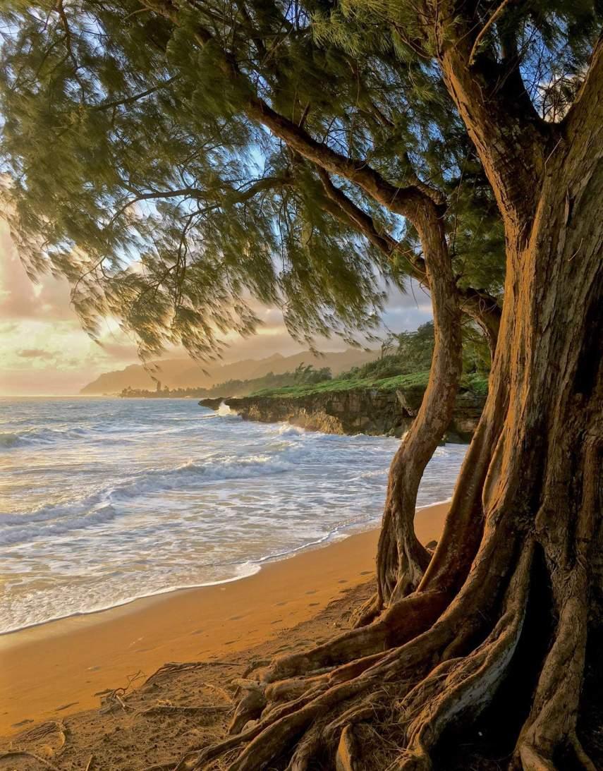 Beach of Eastern Oahu, Laie, Hawaii