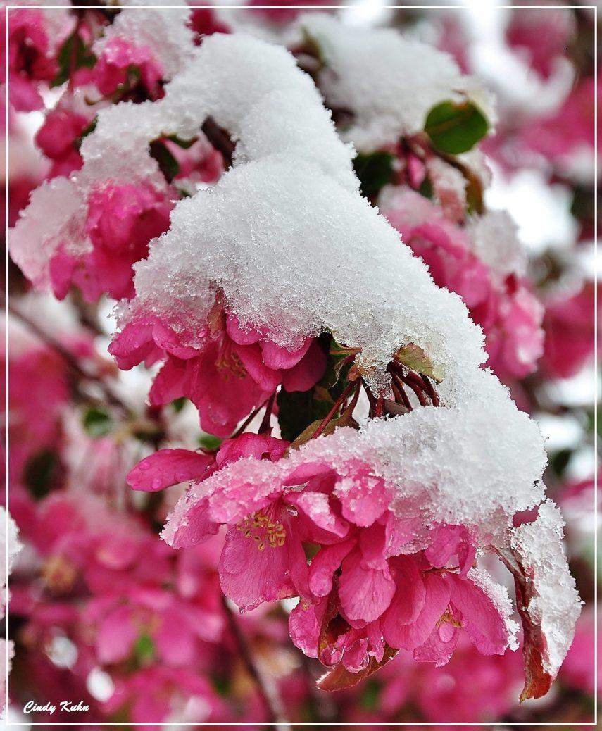 Flowers under melting snow